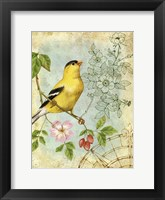 Songbird Sketchbook III Framed Print