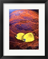 Framed Jeweled Fish II