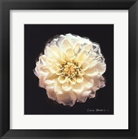 Framed Vibrant Flower V