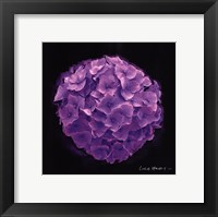 Framed Vibrant Flower I