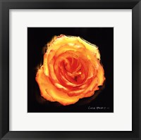 Framed Vibrant Flower II