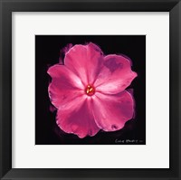 Framed Vibrant Flower III