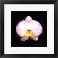 Framed Vibrant Flower IV