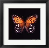 Framed Techno Butterfly IV