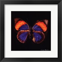 Framed Techno Butterfly III