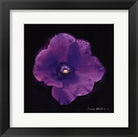 Framed Vibrant Flower VIII
