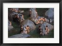 Framed Hippo Pod