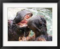 Framed Hippopotamus at Barcelona Zoo