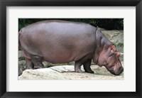 Framed Nijlpaard