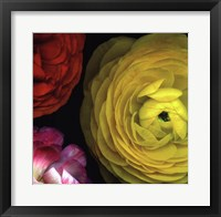Ranunculus I Right Framed Print