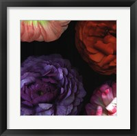 Ranunculus I Left Framed Print