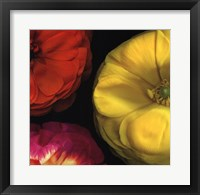 Ranunculus II RIght Framed Print