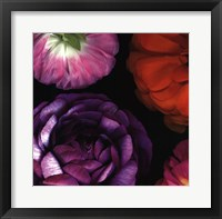 Framed Ranunculus II Left