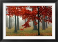 Framed Autumn Mist II