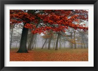 Framed Autumn Mist I