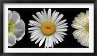 Framed White Diptych