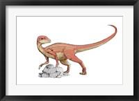Abrictosaurus Framed Print
