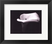 Framed Calla Lilly III - mini