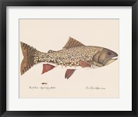 Framed Brook Trout - Royal Coachman Bucktail