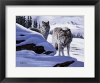 Framed Wolves On The Prowl