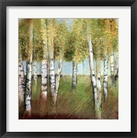 BIRCH WOODS II Framed Print