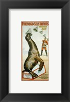 Framed Sea Lion Catching Hats