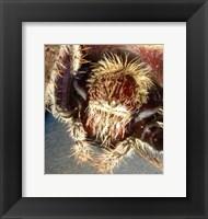 Framed Spider Close Up
