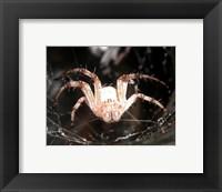 Framed Spider In Web