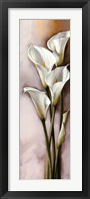 Framed Callas Gracieux II