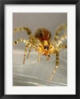 Framed Spider Spinning Web