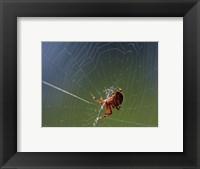Framed Spider Spinning Its Web