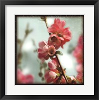 Framed Quince Blossoms III