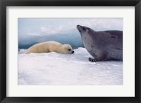 Framed Harp Seals Adult And Baby