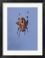 Framed Low angle view of a spider on web
