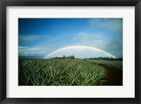 Framed Makawao, Rainbow over farm, USA, Hawaii