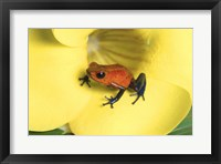 Framed Strawberry Poison Dart Frog