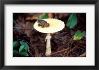 Framed Toad
