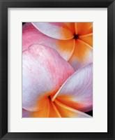 Flowers I Framed Print