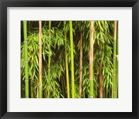 Framed Bamboo Richelieu