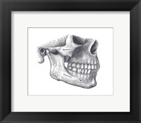 Framed Skull Diagram