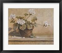 Framed White Geranium