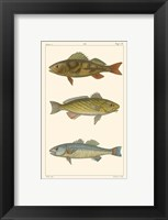 Framed Freshwater Fish I