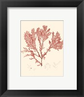 Nature Print in Coral IV Framed Print