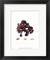 Nature Print in Coral I Framed Print