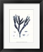 Nature Print in Aqua III Framed Print