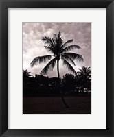 Framed Palms At Night II