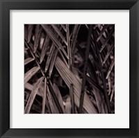 Framed Bamboo Study II
