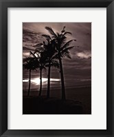 Framed Palms At Night III