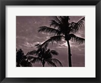Palms At Night IV Framed Print