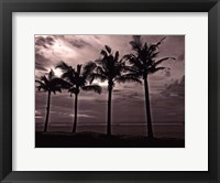 Palms At Night VI Framed Print